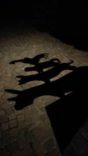 Bei Nacht: Schattenspiel auf dem Pflaster. Foto: Annica Müllenberg