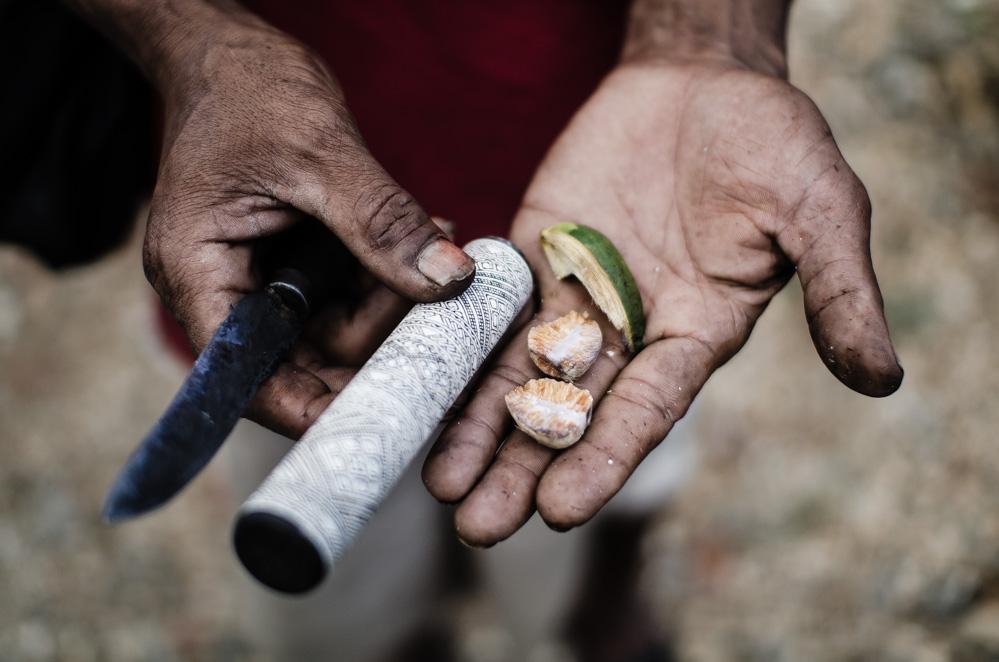 La nuez de betel se masca en muchas partes del mundo, sobre todo en África oriental, Pakistán, La India, el sureste asiático, Papúa Nueva Guinea y Micronesia. Es una de las principales causas del cáncer de boca, laringe y lengua.