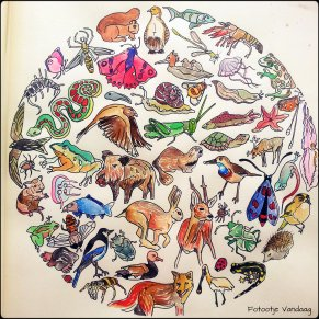 dierenwereld kleur