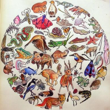 Dierenwereld