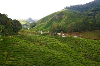 BOH Sungai Palas Tea Centre
