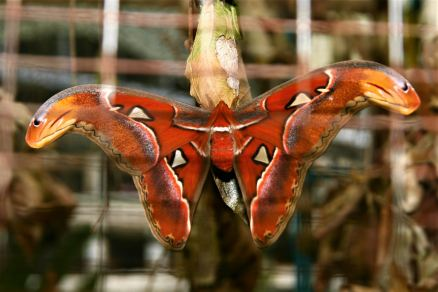 Cameron Highland Butterfly Farm