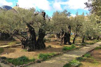 Ogród Getsemanii