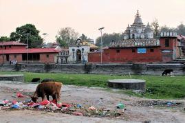 Kompleks Świątynny Pasupatinath