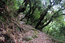 Park Narodowy Shivapuri - szlak na szczyt