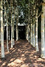 Ogród w Barwach Narodowych