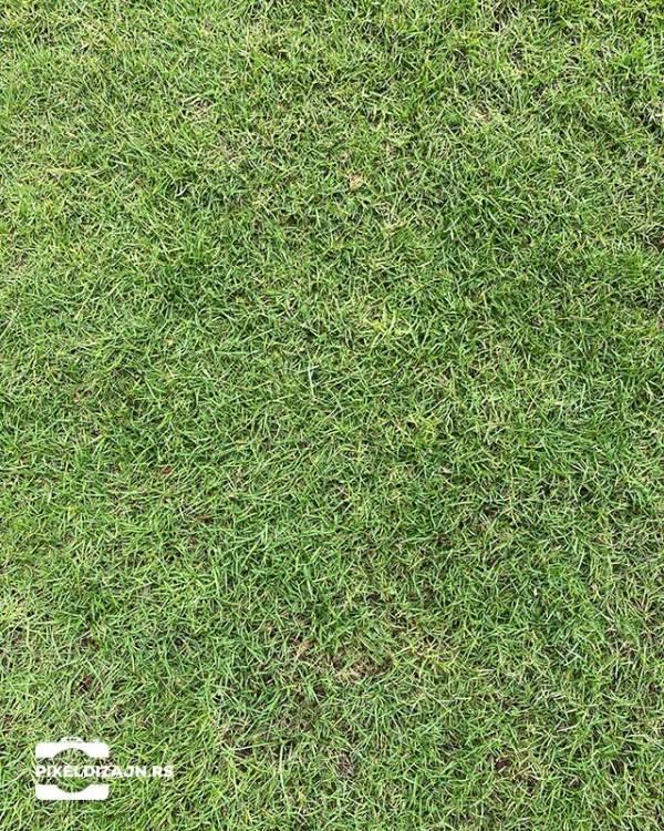Grass_a_foto_pozadine_pixel_web