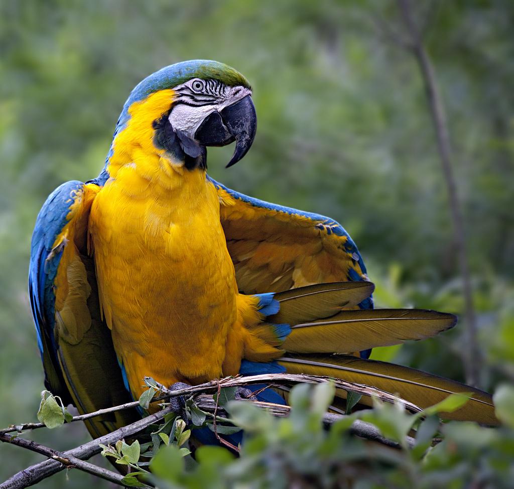 Самый большой попугай в мире фото и названия