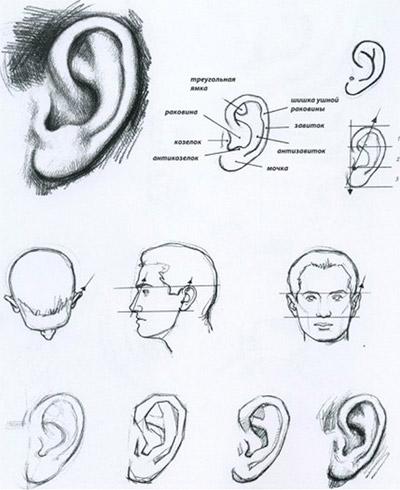 rita öronen