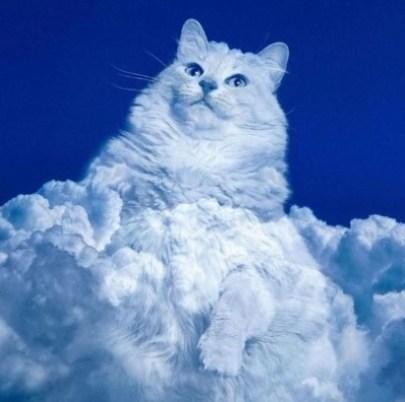 Gatinho nas nuvens. Foto montagem em resposta à Amanda Hyslop no Twitter. (Foto: Twitter/@MisguidedMinx)
