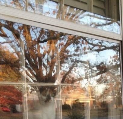 Gatinho olhando a rua pelo vidro da janela e reflexo da árvore dá bem na sua cabeça, como se fizesse parte do seu corpo. Foto tirada em resposta a Amanda Hyslop no Twitter. (Foto: Twitter/@avidreadingmom)