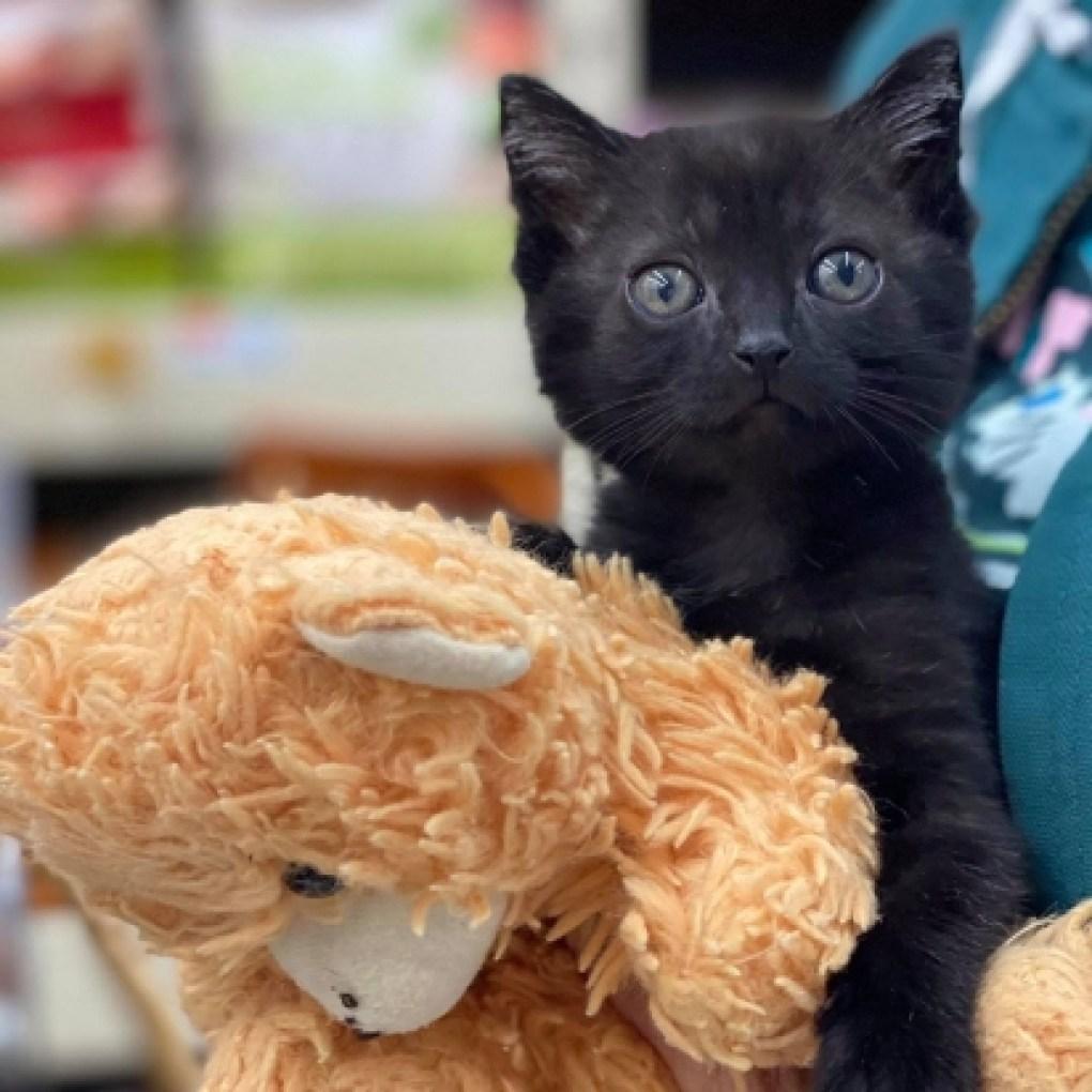A gatinha Cricket ganhou um ursinho de pelúcia ao chegar no abrigo de animais. (Foto: Facebook/Catsnip Etc)