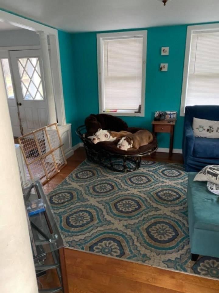 Os cães buldogues Alice e Edgar juntos na casa de Jordan.