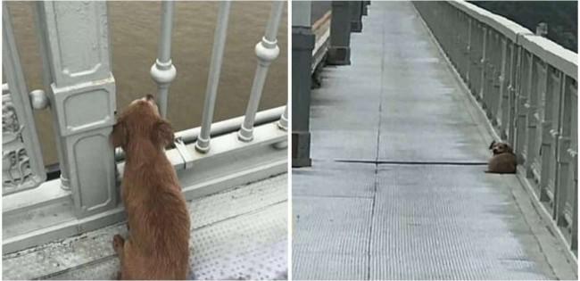 Cachorro permanece em ponte esperando dono que se suicidou no local
