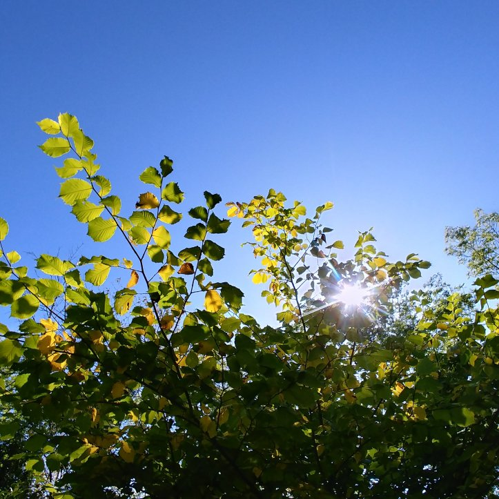 The sun shining through green leaves