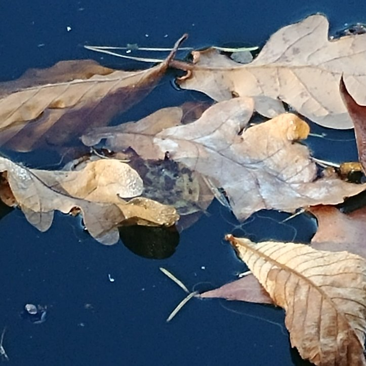 Nature photo showing autumn leaves in blue water