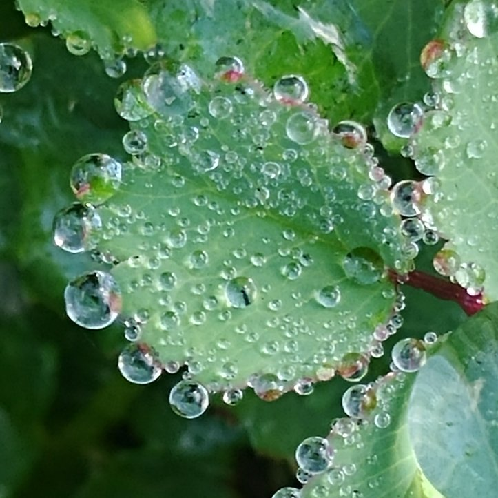 Water drops on green plant, macro photo by fotosbykarin