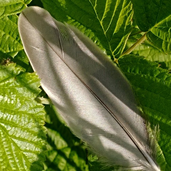 Shadows on the feather, lines on the plants, textures in nature, photos by fotosbykarin
