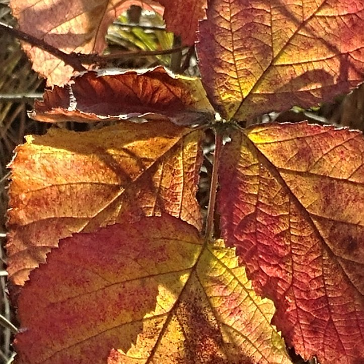 Yellow, red and brown colored fall leaves, nature photo by fotosbykarin