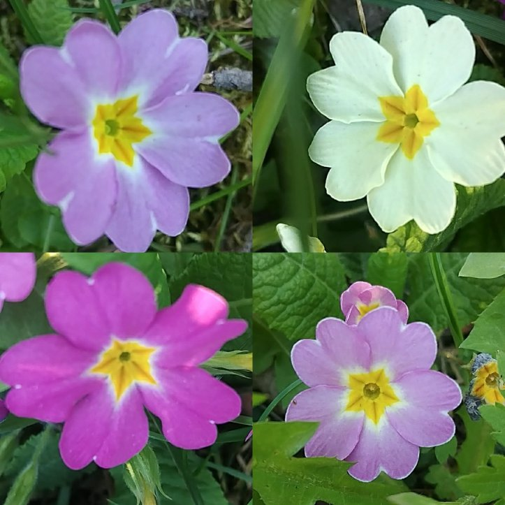 Pink and yellow spring flowers collage, nature photos by fotosbykarin