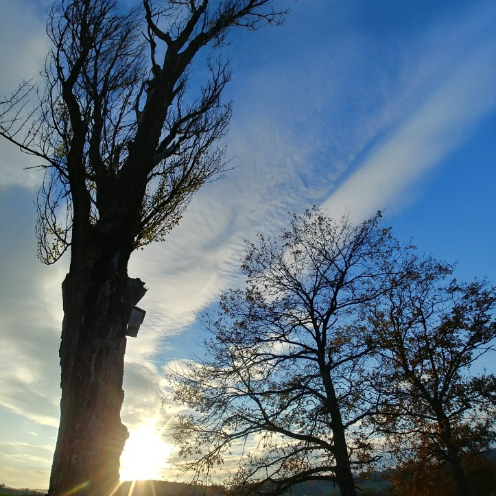 Tree silouette and sundown, nature photography by fotosbykarin