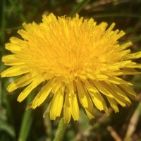 Sunny yellow flowers for you today