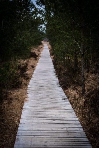 Bohlenweg im Pietzmoor