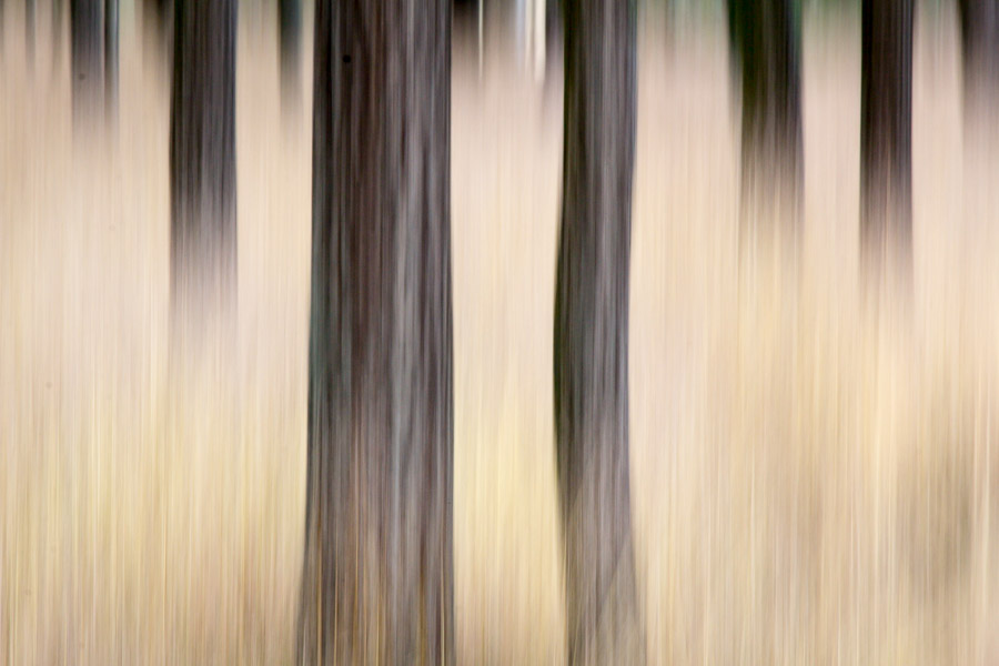 experimentelle Landschaftsfotografie