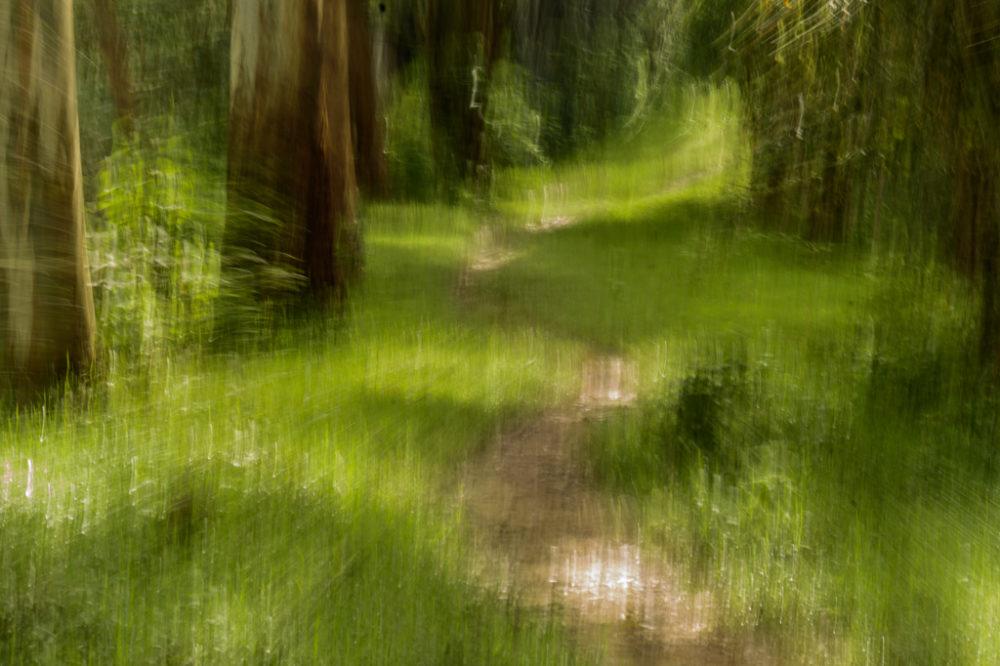 paisaje verdoso en movimiento