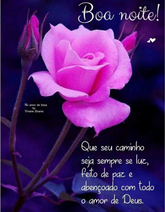 Boa noite com rosa e carinho