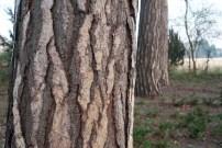 Labyrinth im Wachstum