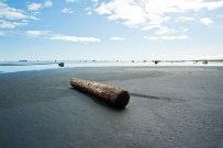 Einsamer Holzstamm am Ufer