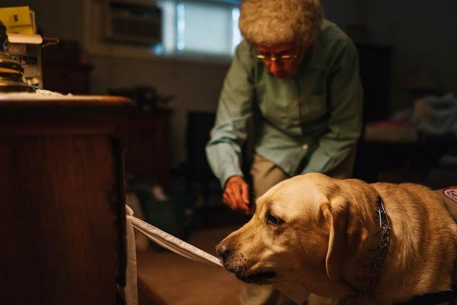 Старушка и собака