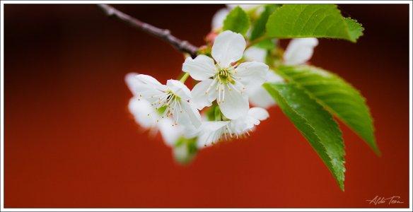 Kevade jäljed