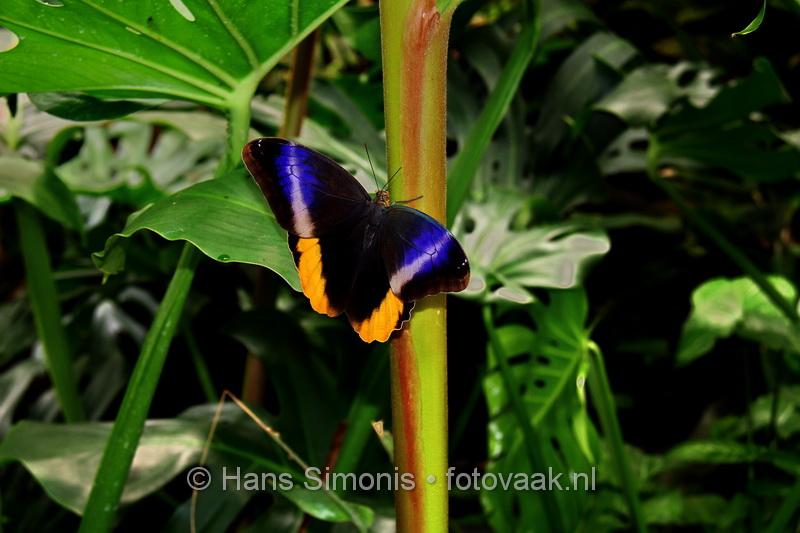 140407_23_vlindersaandevlietspecial2014