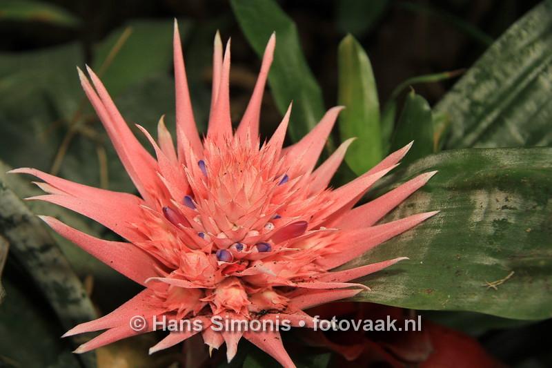 160626_008_Vlinders_aan_de_Vliet