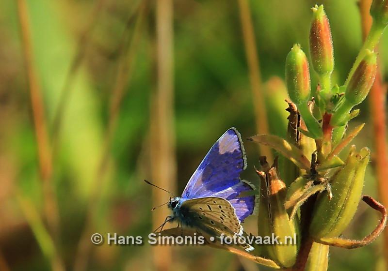 160830007_bij_vlinders-aan_de-vliet