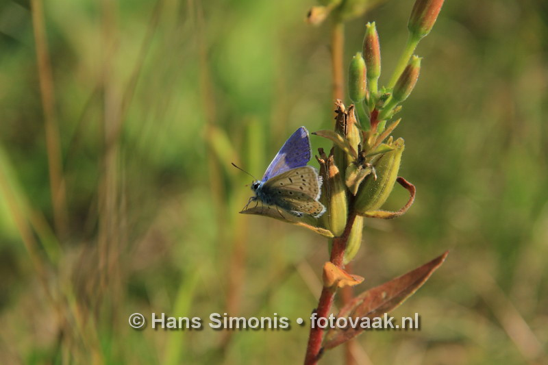 160830009_bij_vlinders-aan_de-vliet