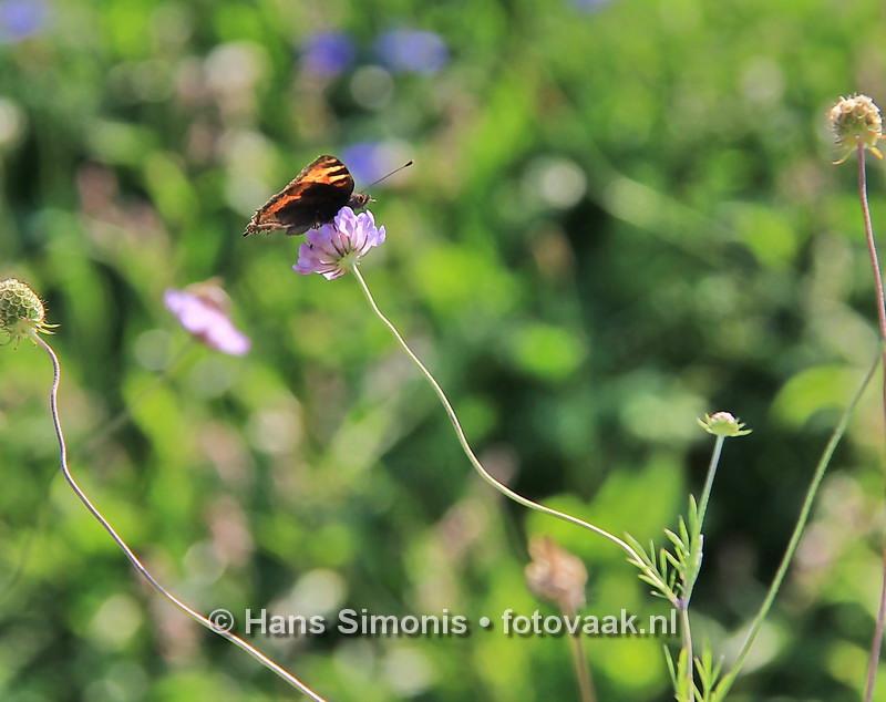 160830012_bij_vlinders-aan_de-vliet