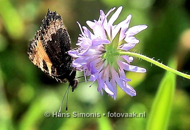 160830014_bij_vlinders-aan_de-vliet