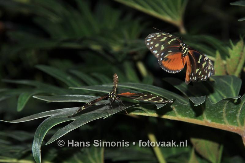 16093017vlinders_aan_de_vliet