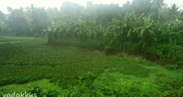 Rain pounds down furiously upon a swamp outside Kottayam