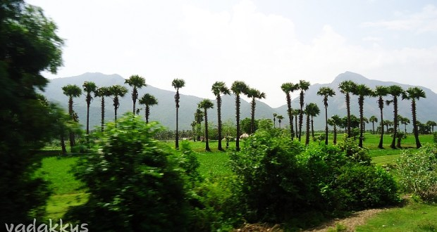 Natural scenery of the Palakkad/Coimbatore Countryside