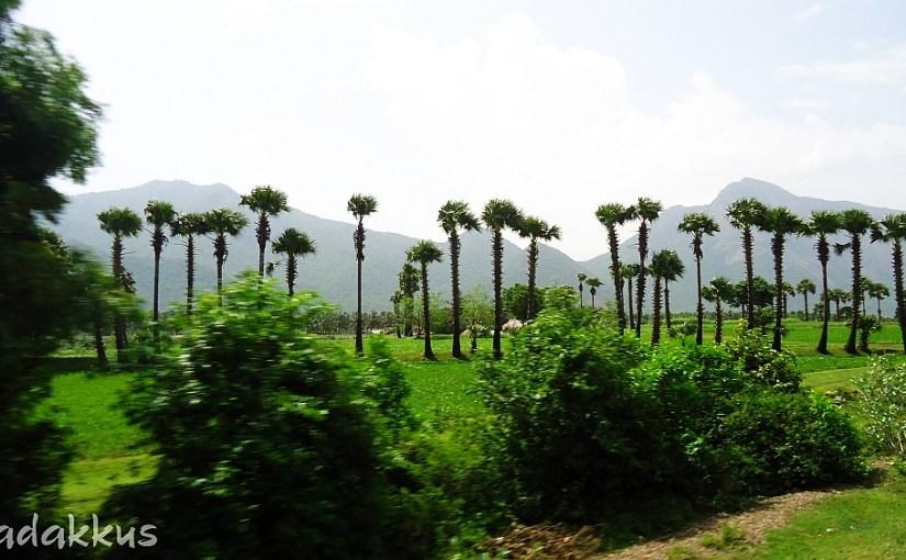Palakkad/Coimbatore Countryside Scenery