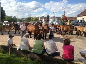 Pferdemarkt in Etang