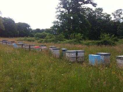 Ein paar der 300 Bienenvölker stehen auch im Park von Fougerette