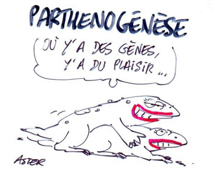 Parthénogénèse