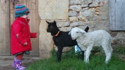 Les enfants adorent les animaux de la ferme !