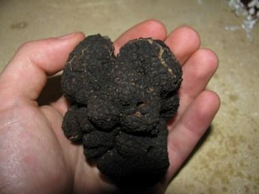 la truffe noire du Périgord