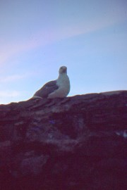 A pigeon on a rock